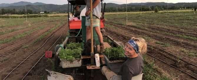 horn creek hemp team members planting with diy planter