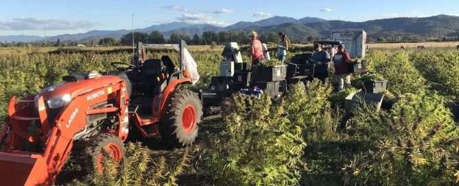 Horn Creek Hemp Harvest